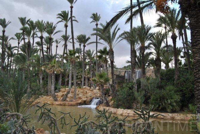 Парк эль пальмераль в аликанте цены